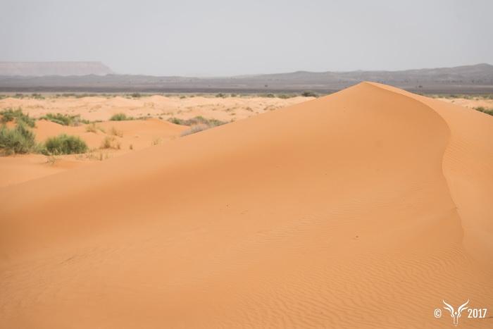 dune a